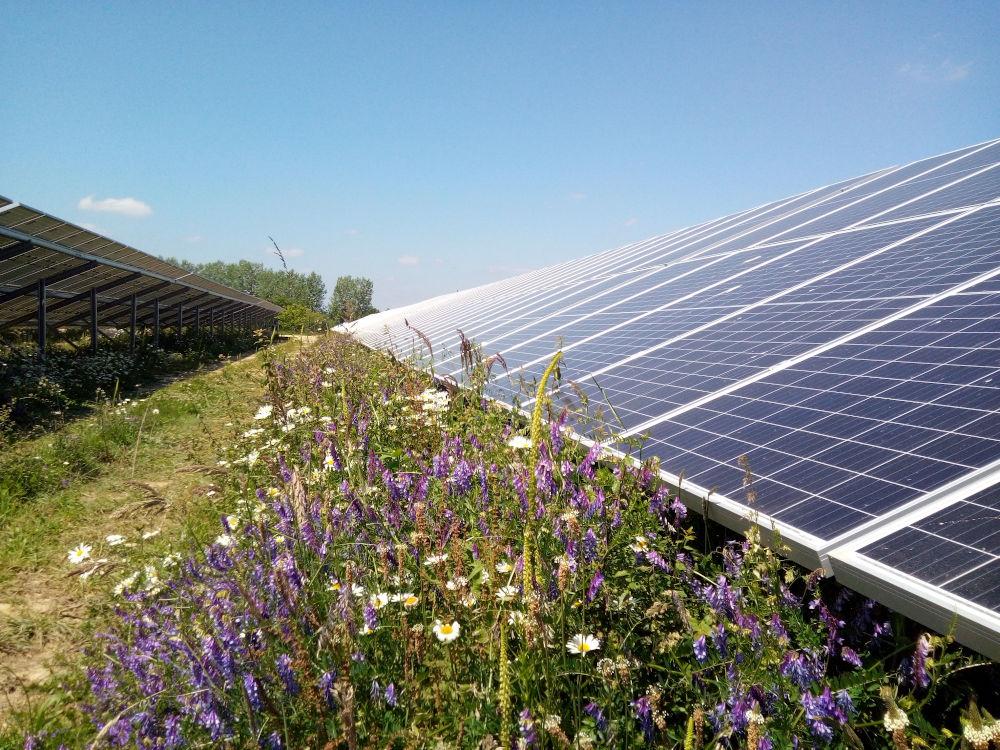 fleurs sauvages au pied d'un rang de panneaux solaires